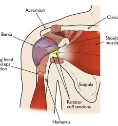 this illustration of the shoulder highlights the major components of the joint in most rotator cuff  [ 1079 x 956 Pixel ]