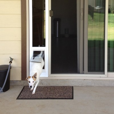 Happiness is a Doggie Door
