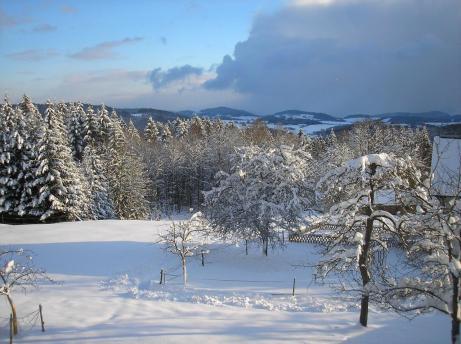 Winter Aussicht Obstgarten