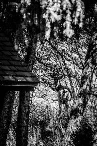 Hidden Elk in the Trees