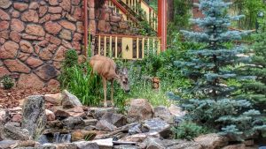 Doe By the Daisy Suite