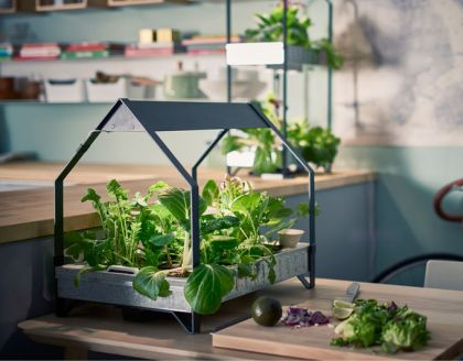 Why More People Are Turning Their Homes Into Indoor Farms