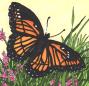 viceroy-butterfly