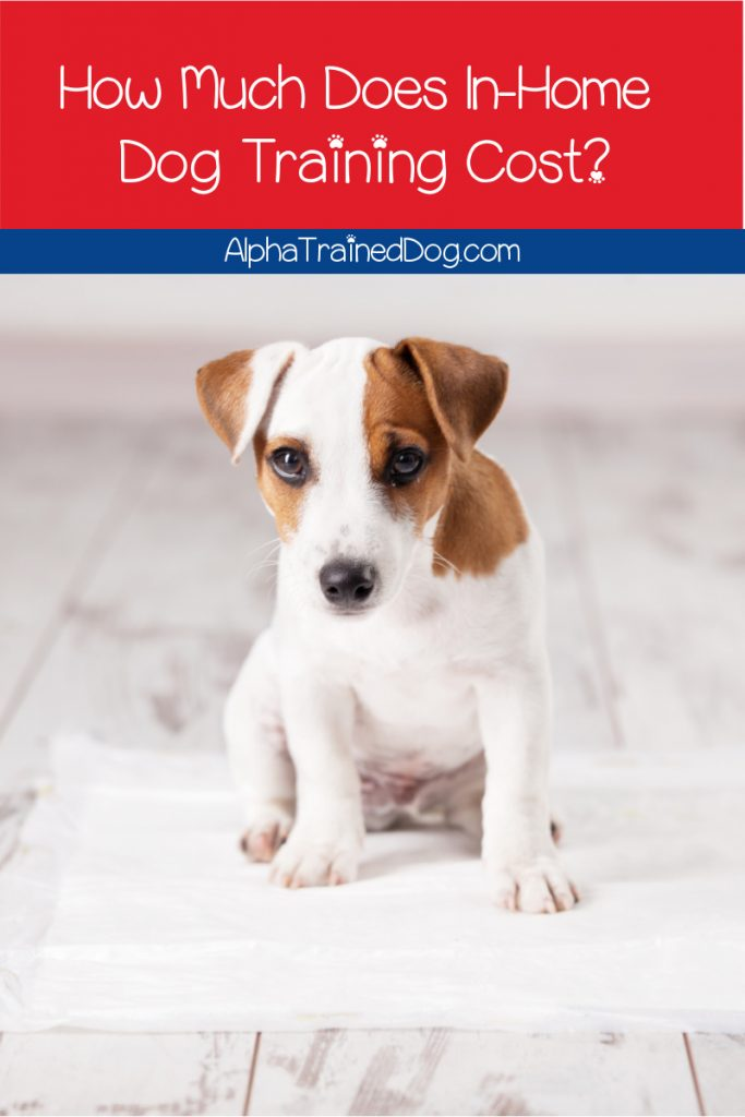 Necessary Information About Training a Dog at Home