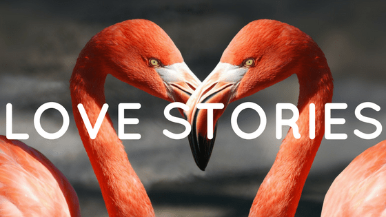 6 Twitter Stories | Alphawings