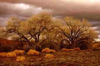 Desert-Gold