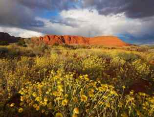 Wildflower Storm Snow Canyon and the scenic town of Ivins witnessed this wonderful show of color on the cliffs and wildflowers at sunset after a May storm. The yellow wildflowers bloomed everywhere.