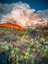 Nathan_Wotkyns_Prickly-Pears-&-Red-Cliffs