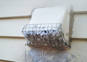 dryer vent cleaning plugged vent hood screen
