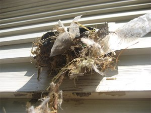 Bird and Rodent Nests in the Vent Hood
