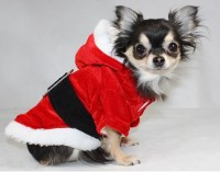 Smarten Up Your Pet With Cute Dog Clothes | Dog Bandanas