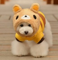 Things To Consider In Choosing Small Dog Clothes