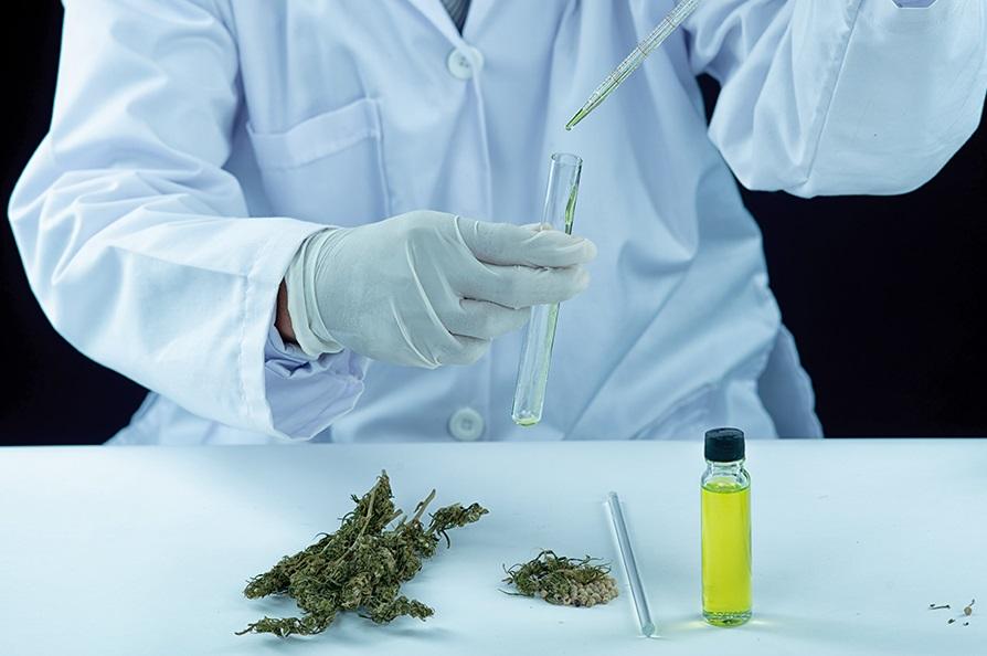 Recherches sur le cannabis