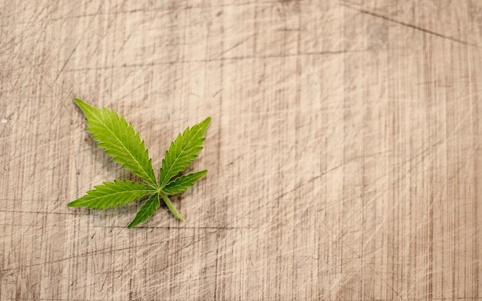 chanvre feuille cannabis