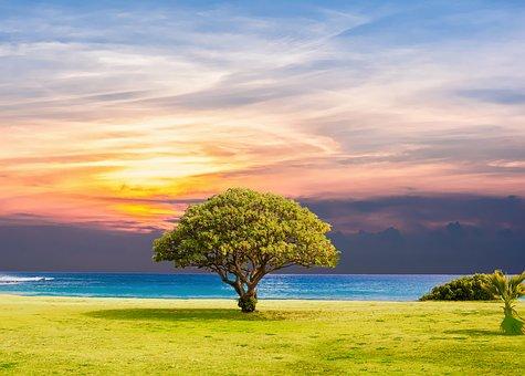 tree-2435269__340