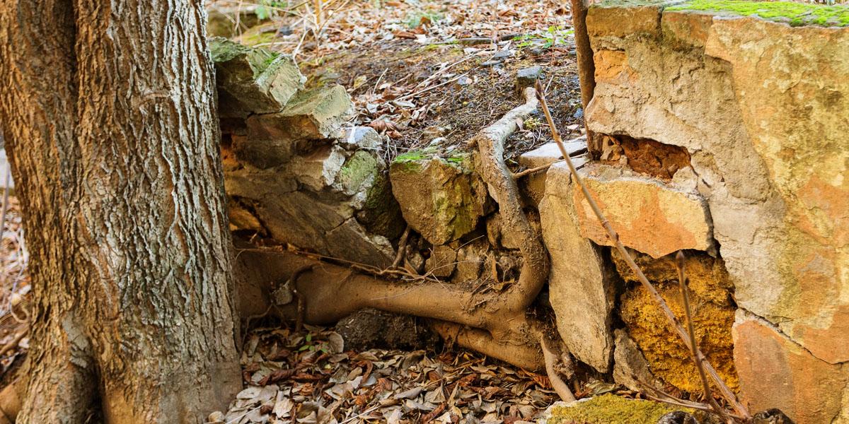 tree roots damage foundation