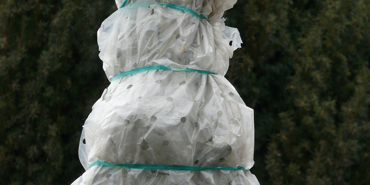 small tree wrapped for protection in winter in New Jersey