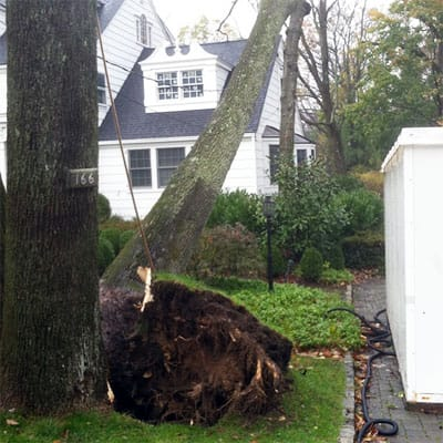 tree that's fallen over during a storm in Morristown, NJ