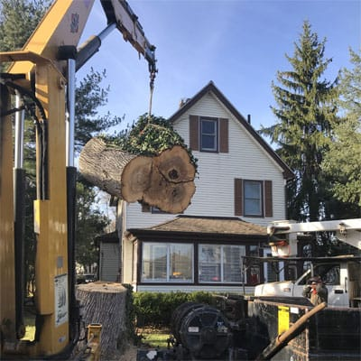 Alpine Tree equipment lifting a heavy log