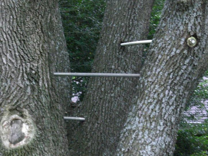 cabling-tree-model-on-garden-or-and-bolting-save-trees-by-better-arborist