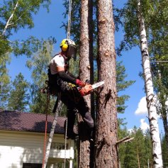 Обрезка деревьев Промышленные альпинисты Москва и Московская область (ООО Альпинисты-М)
