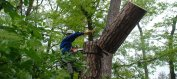 Валка деревьев альпинистами
