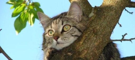 Снять кошку с дерева