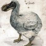 El último dodo