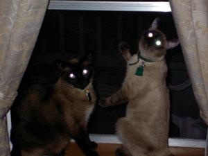 Two Kitties in the Window