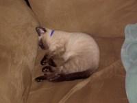 cats 039.JPG