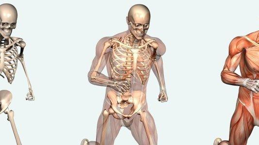 İnsan Vücudu