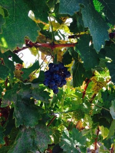 Wine Tasting 15 Leoness