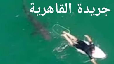 صورة عاجل تغطية للقاهرية من قلب الحدث: إغلاق شواطئ مراسي و رفع الأعلام الحمراء لوجود سمك قرش بالبحر