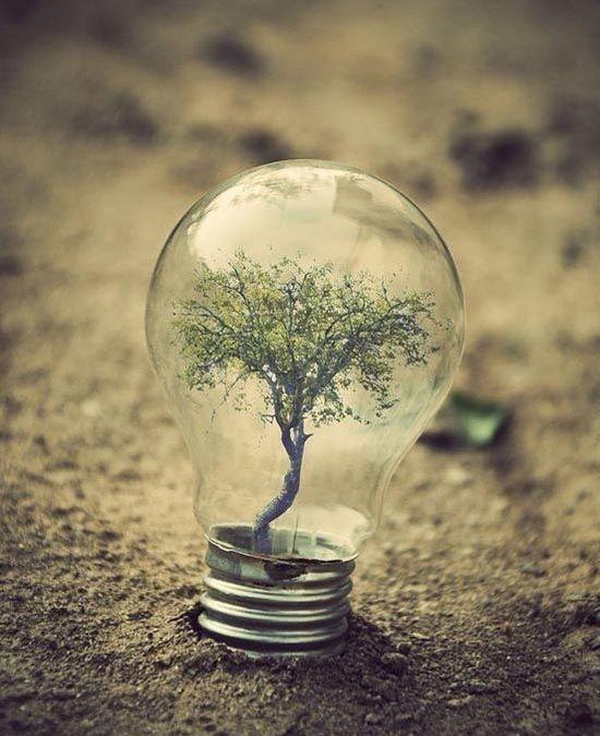 7 claves para la supervivencia organizacional en el 2016