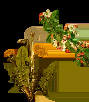13 Ervas Medicinais que todo Alquimista deve cultivar ou ter em casa