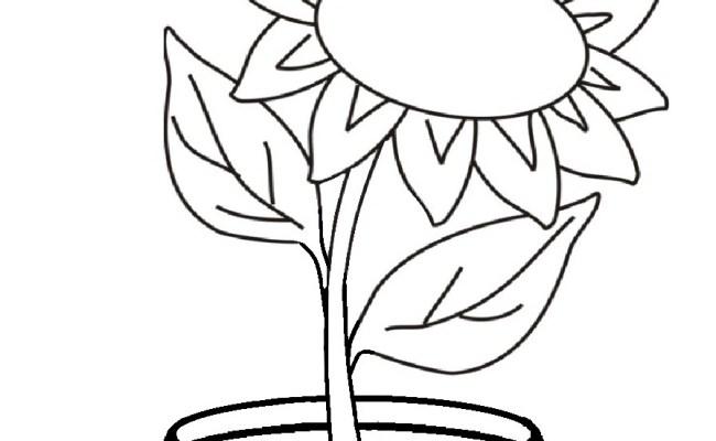 Mewarnai Gambar Bunga Matahari Dengan Gambar Bunga Matahari Bunga Gambar Cute766