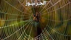 تفسير حلم العنكبوت في المنام للعزباء والمتزوجة والحامل