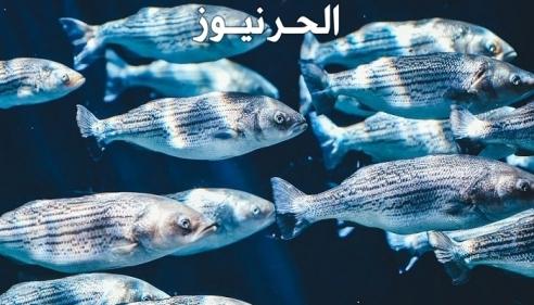 رؤية سمك في المنام