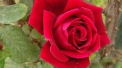 أجمل صور أغلفة وكفرات ازهار وورود للفيس بوك 2020