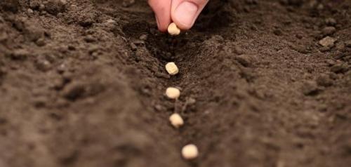 تفسير حلم زرع البذور في المنام