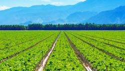 تفسير حلم الزرع الأخضر في المنام