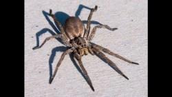 تفسير حلم لدغة العنكبوت في المنام