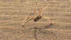 تفسير حلم هجوم العنكبوت في المنام
