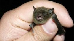 تفسير حلم رؤية أنثى الخفاش في المنام