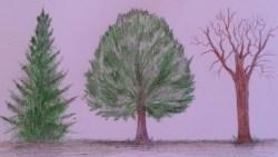 تفسير حلم سقوط شجرة في المنام