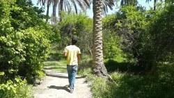 تفسير حلم البستان الاخضر المثمر في المنام