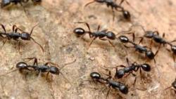 تفسير حلم النمل الأحمر في المنام