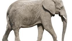 تفسير رؤيا وجود الفيل داخل المنزل في المنام