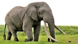 تفسير حلم الصراع مع الفيل في المنام