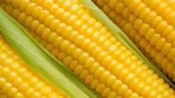 تفسير حلم أكواز الذرة في المنام